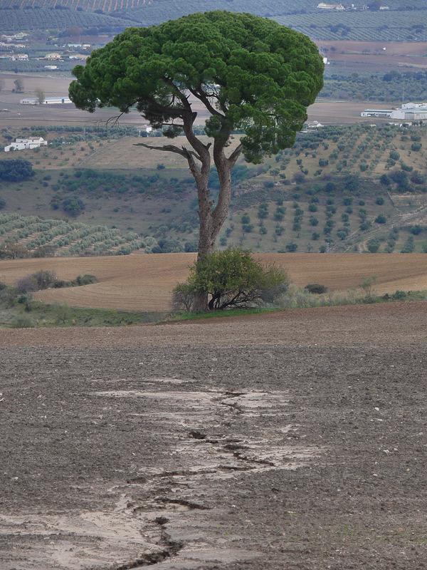 II RUTA-PEREGRINACION RONDA - OLVERA 106951604