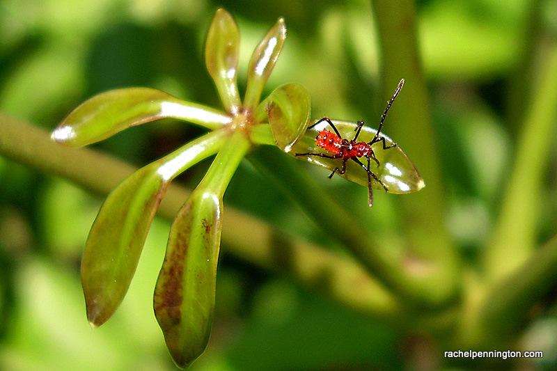 Baby Stink Bug (I Think)