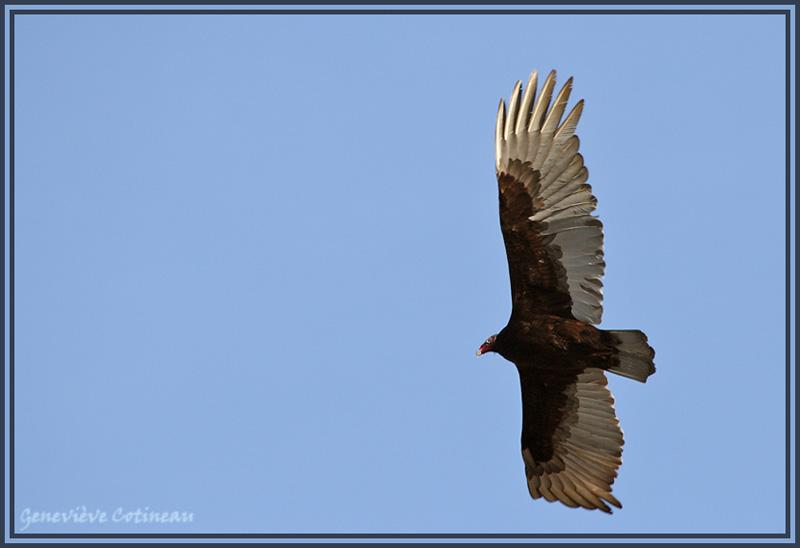 Ma saison de photo d'oiseaux est ouverte! Original
