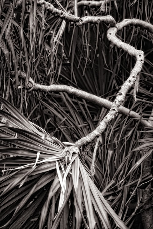 Pandanus abstract