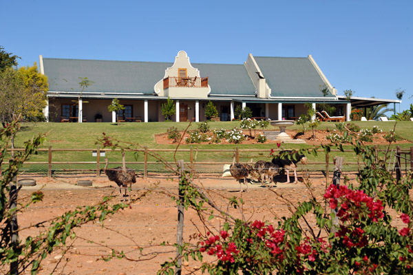 Ostrich in the front yard of Mooiplaas