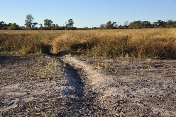 Hippo path on a dry floodplain