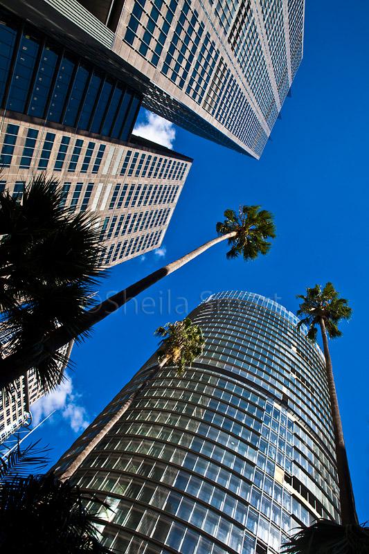 City highrise