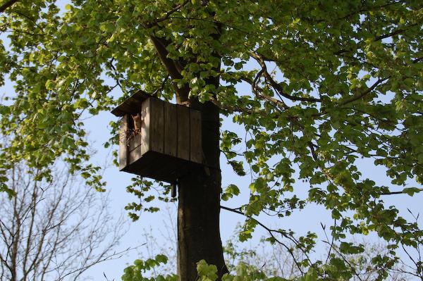 Tre egernunger fødtes i uglekassen