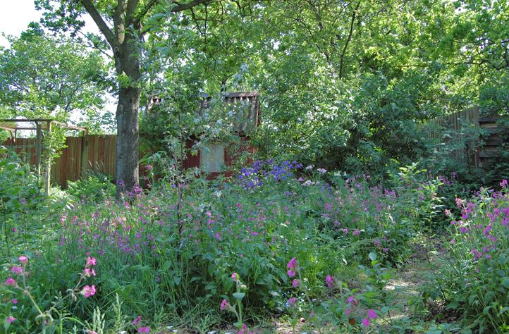 Skovhaven i maj  -  Our woodlandgarden