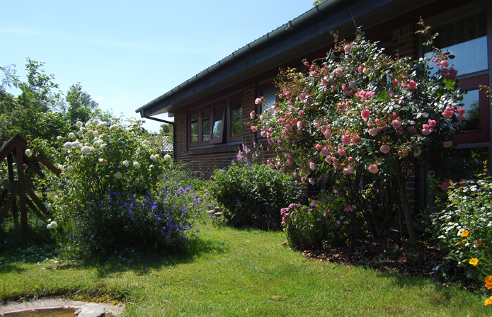 Our frontgarden with Rosa Bonica and Mme. Plantier