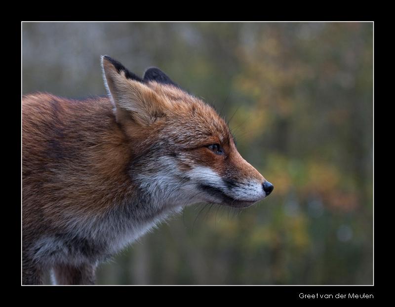 2243 fox