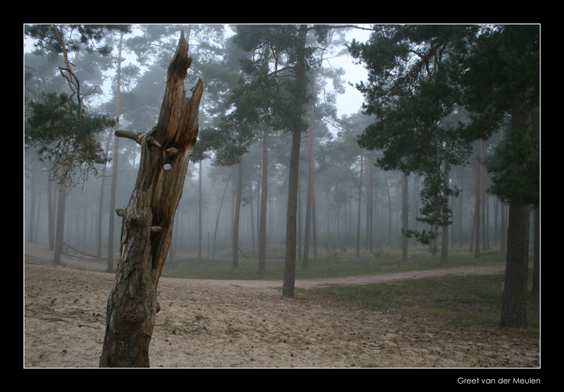 9321 misty morning in Sahara, Ommen