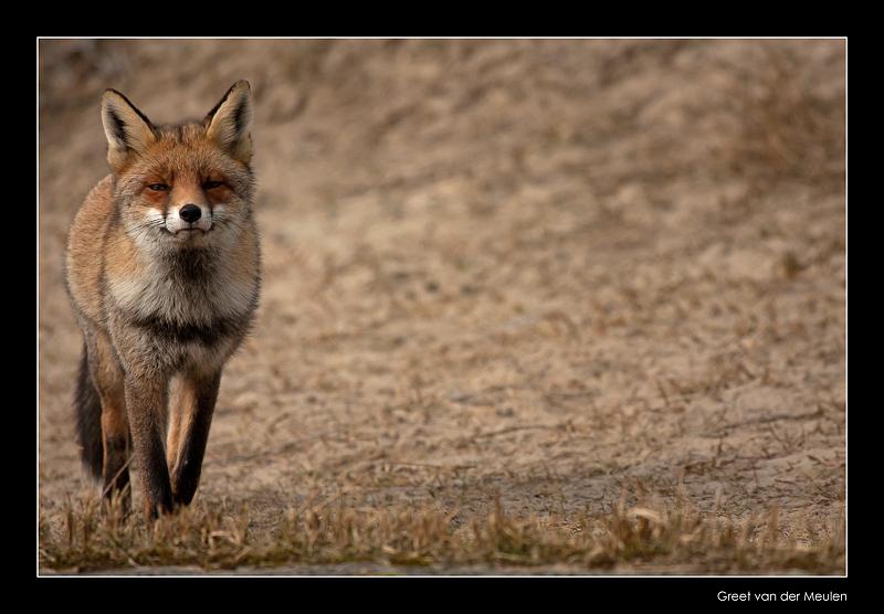 9323 proud fox