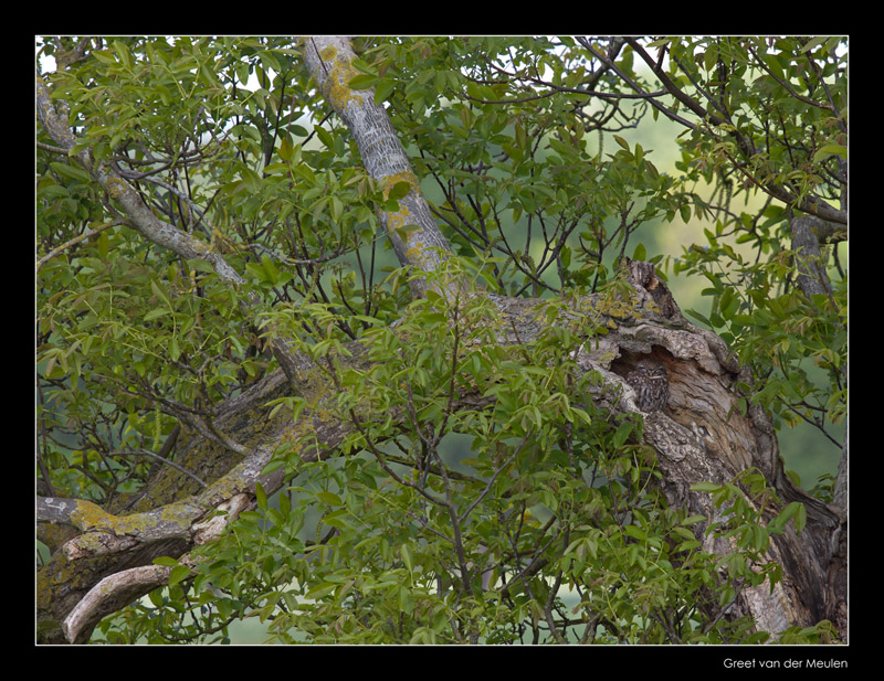 4544 find the little owl