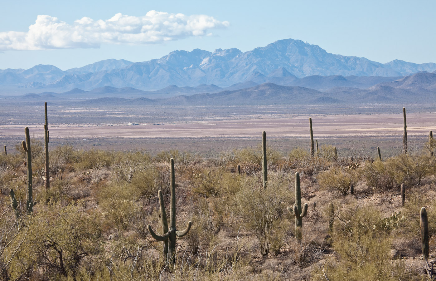 011_Saguaros with mountains in distance__7087`1001141023.jpg