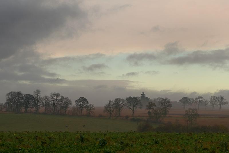 Misty Morning Trees.