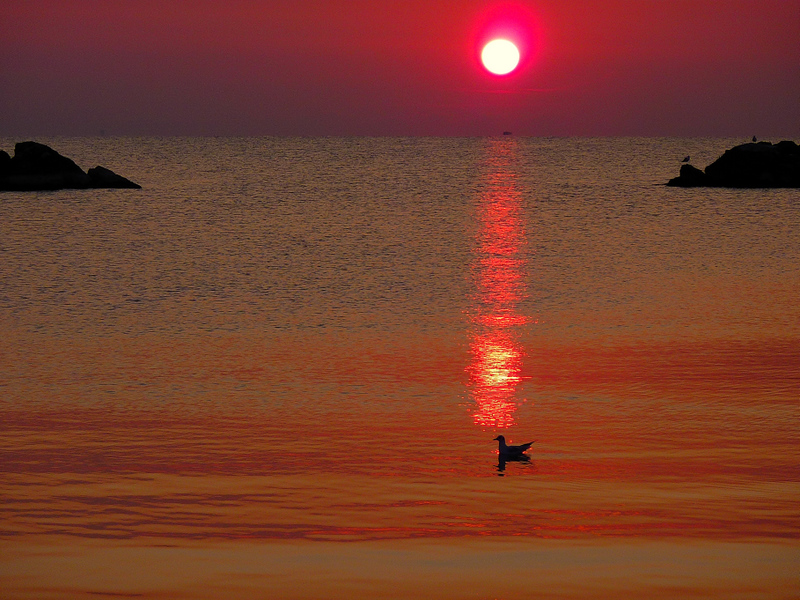 The red sun and the gull...