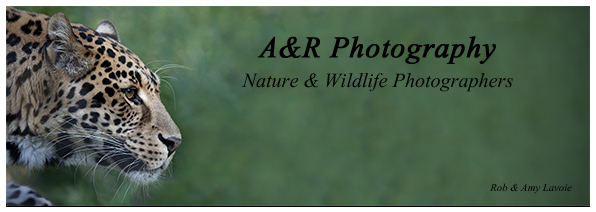 A & R Photography