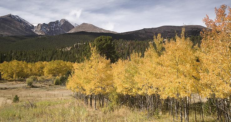 Longs Peak and Aspens