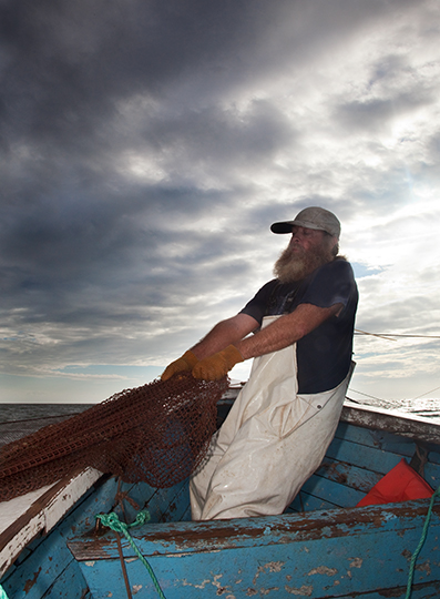 Pulling Up The Pound Net