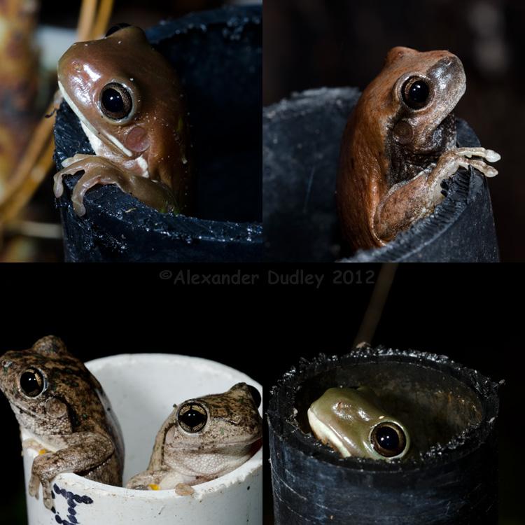 Frog Poles D I Y Frog Habitat Photo Alexander Dudley Photos At