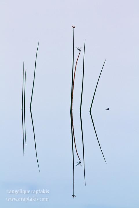 _MG_1209 dragonfly w.jpg