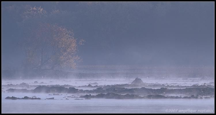_MG_9972 mist c2wf.jpg