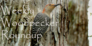 Weekly Woodpecker Roundup