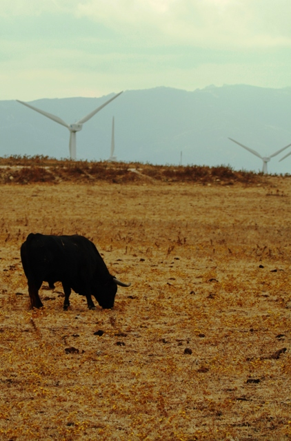Toro y molinos