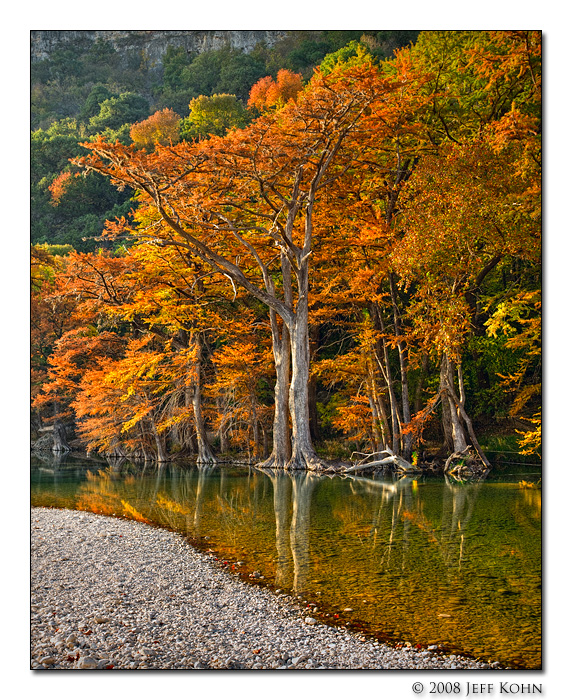 Cypress Trees and River Bank #2