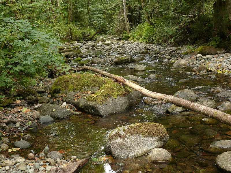 Creek Ladysmith.jpg