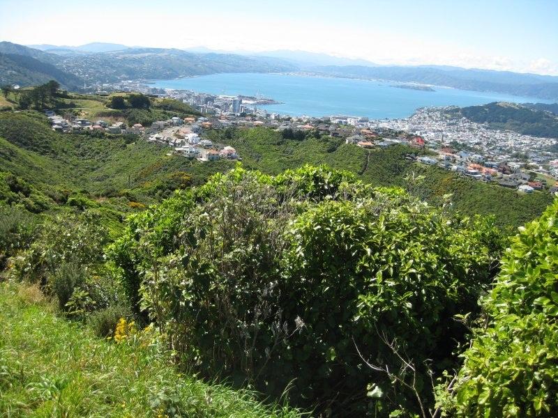 Wellington Panorama