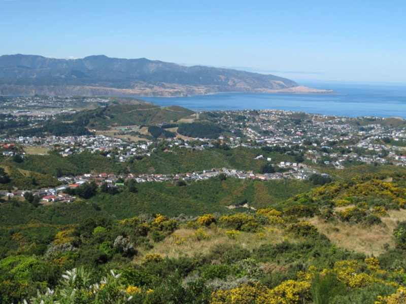 Wellington´s Coast