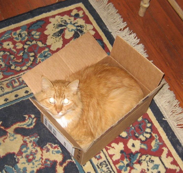 cat in a box.JPG