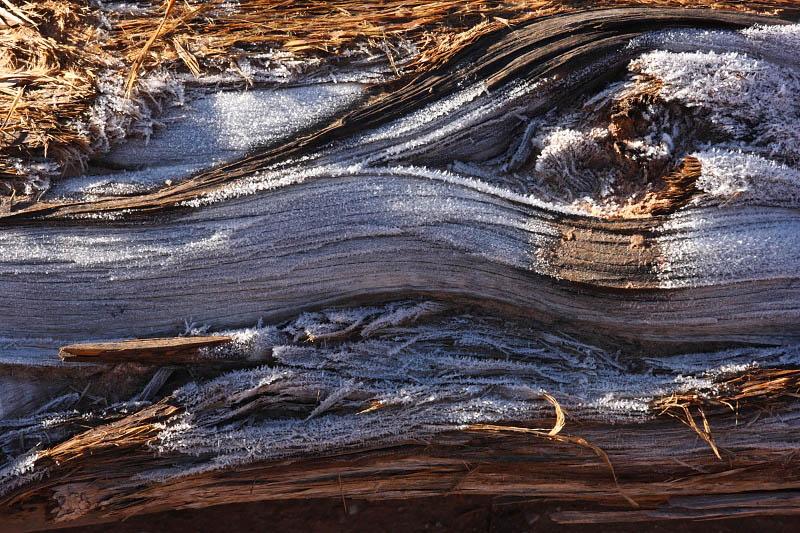 Frozen tree trunk