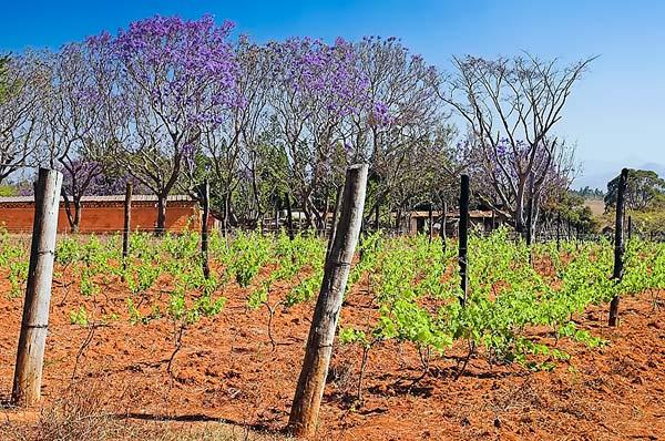 Winery (Ambalavao)