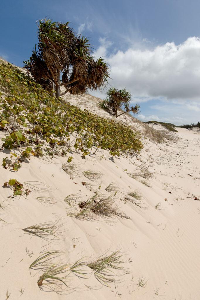 Dune and pandanus (DSC4048)
