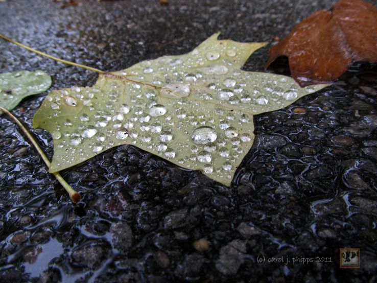 From Dry to Wet From Summer to Fall in Early September