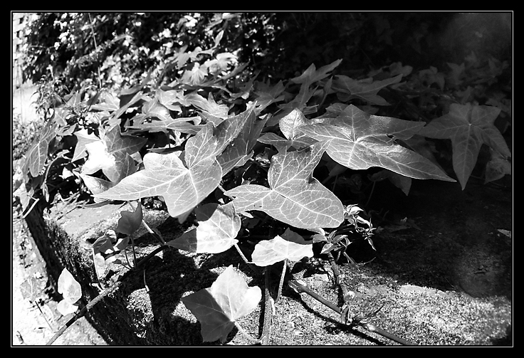 Image from the garden - Leaves