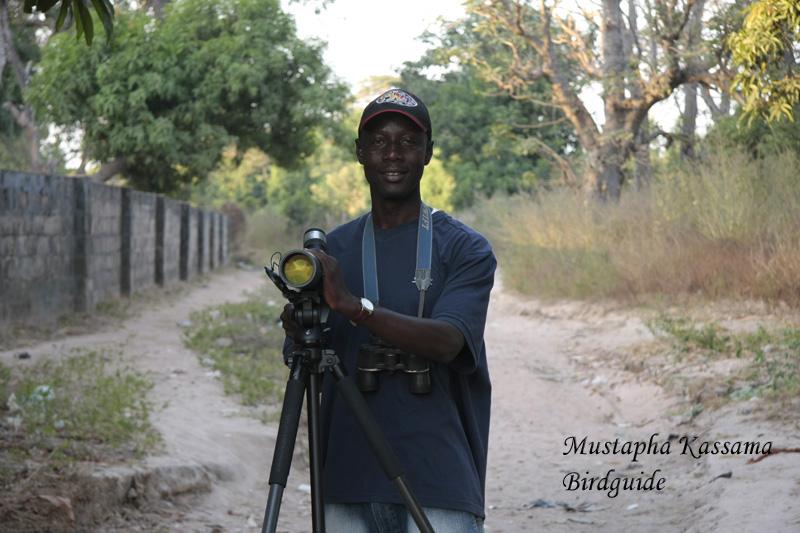 Mustapha Kassama-Birdguide-Vogelgids Gambia