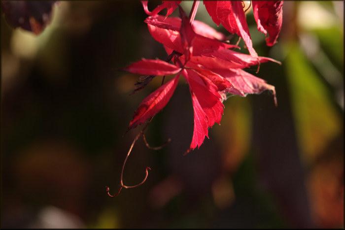 autumn bling