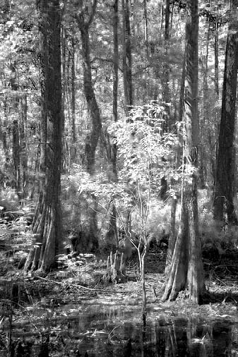 Swamp Scene 56967 (faux IR)