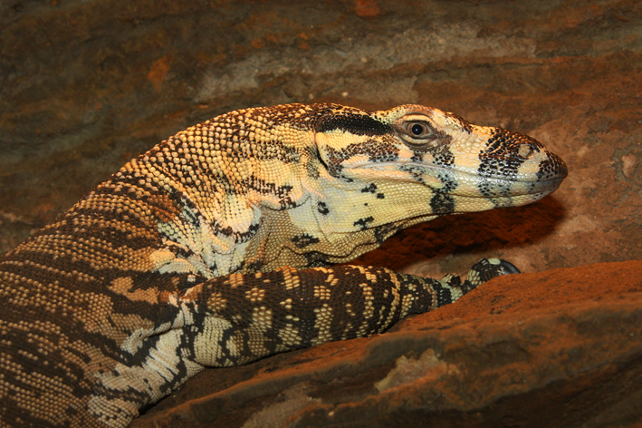 Baby Lace Monitor