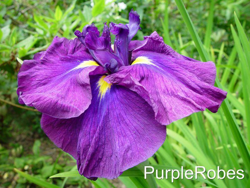 PurpleRobes.jpg