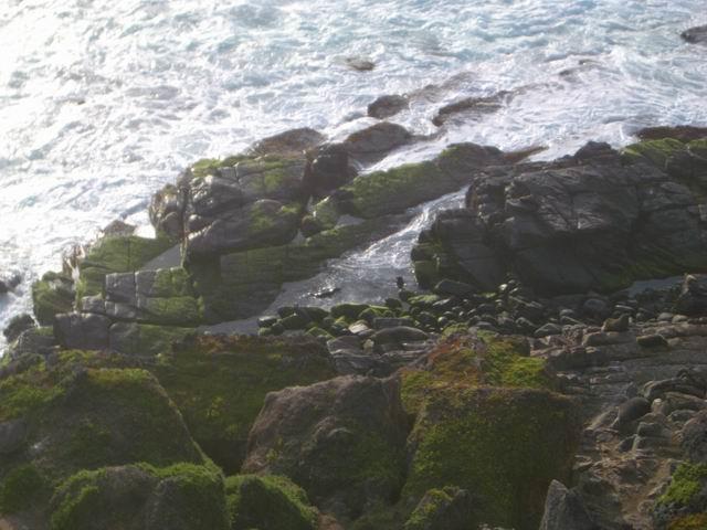 KangarooIsland_Cape du Couedic 7Seals.JPG
