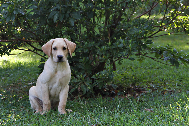 Titan At Ten Weeks Old