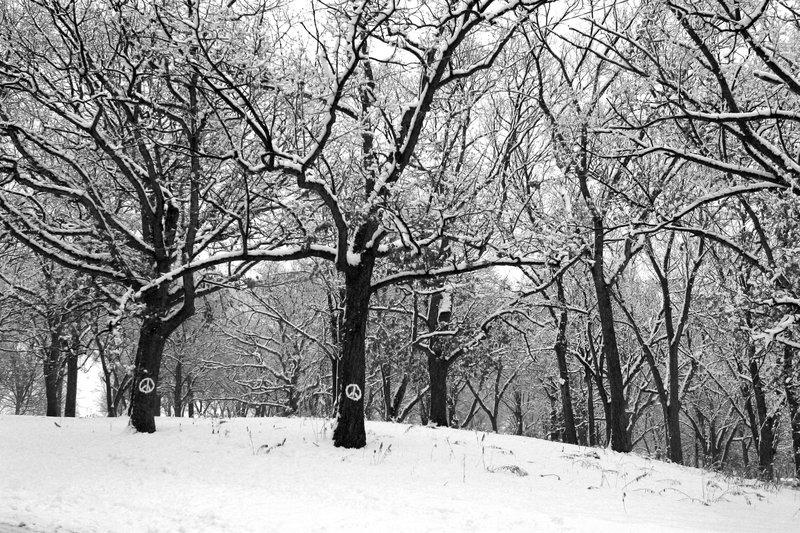 001 Peace trees.jpg