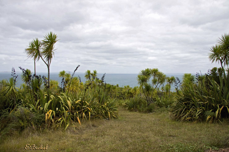 Tiritiri Island