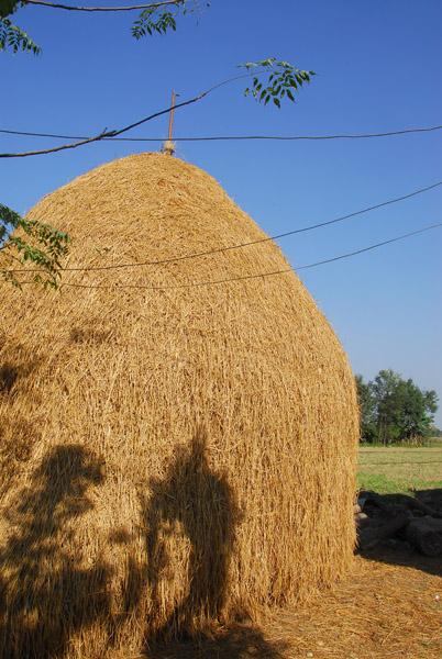 Rice stack, near Sauraha, Central Terai
