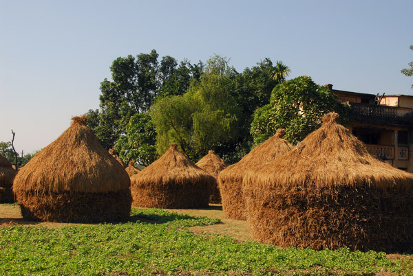 Rice stacks near Sauraha, Central Terai, Nepal