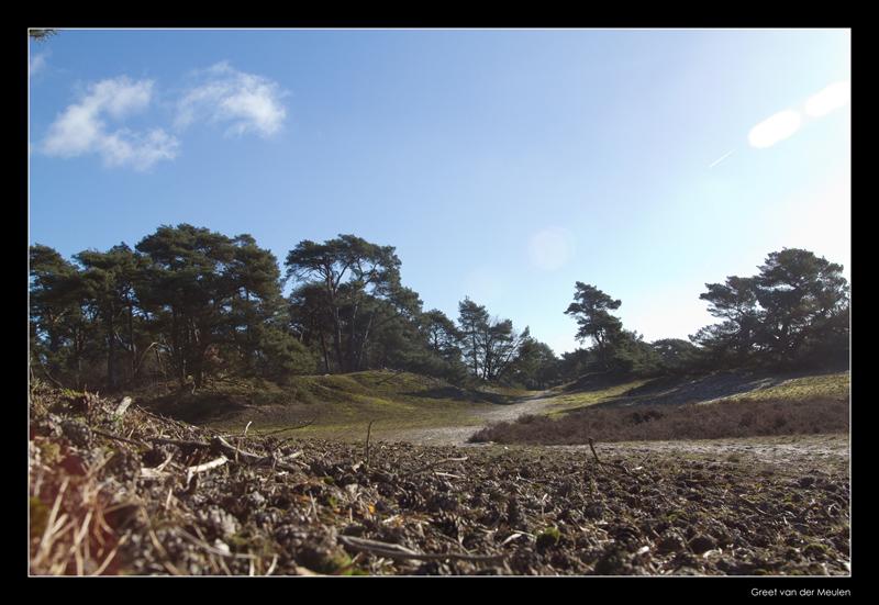 0612 Beerzerveld;  Dutch landscape on sandground