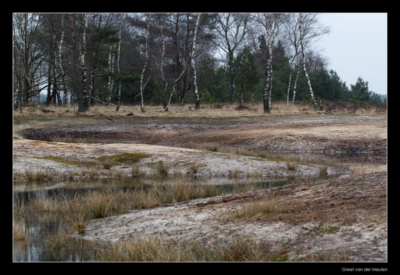 0408 S line in Dutch landscape