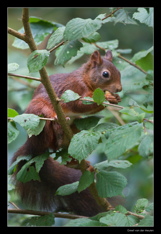 5663 time for hazelnuts