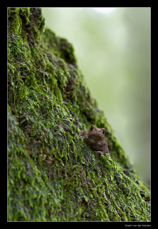5921 small toad on a big tree